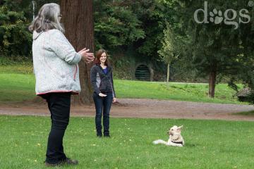 Reportageshooting_DOGS Waldkirch_Breitenkamp_240917-015_klein