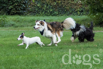 Freilauf_Reportageshooting_DOGS Waldkirch_Breitenkamp_240917-071_klein