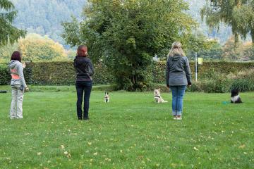 Reportageshooting_DOGS Waldkirch_Breitenkamp_240917-052_klein