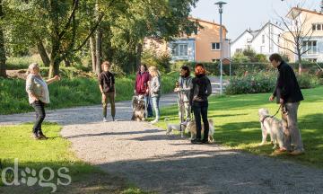 Reportageshooting_DOGS Waldkirch_Breitenkamp_240917-495_klein